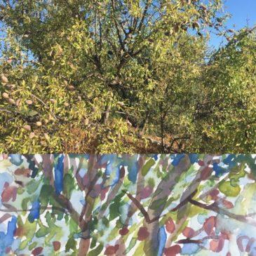 Kijken + Zien = Vruchten aan de boom