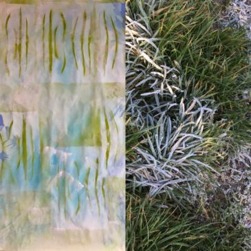Kijken + Zien = Wintergras
