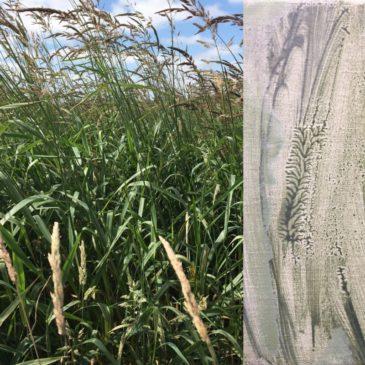 Kijken + Zien = Wuivend gras